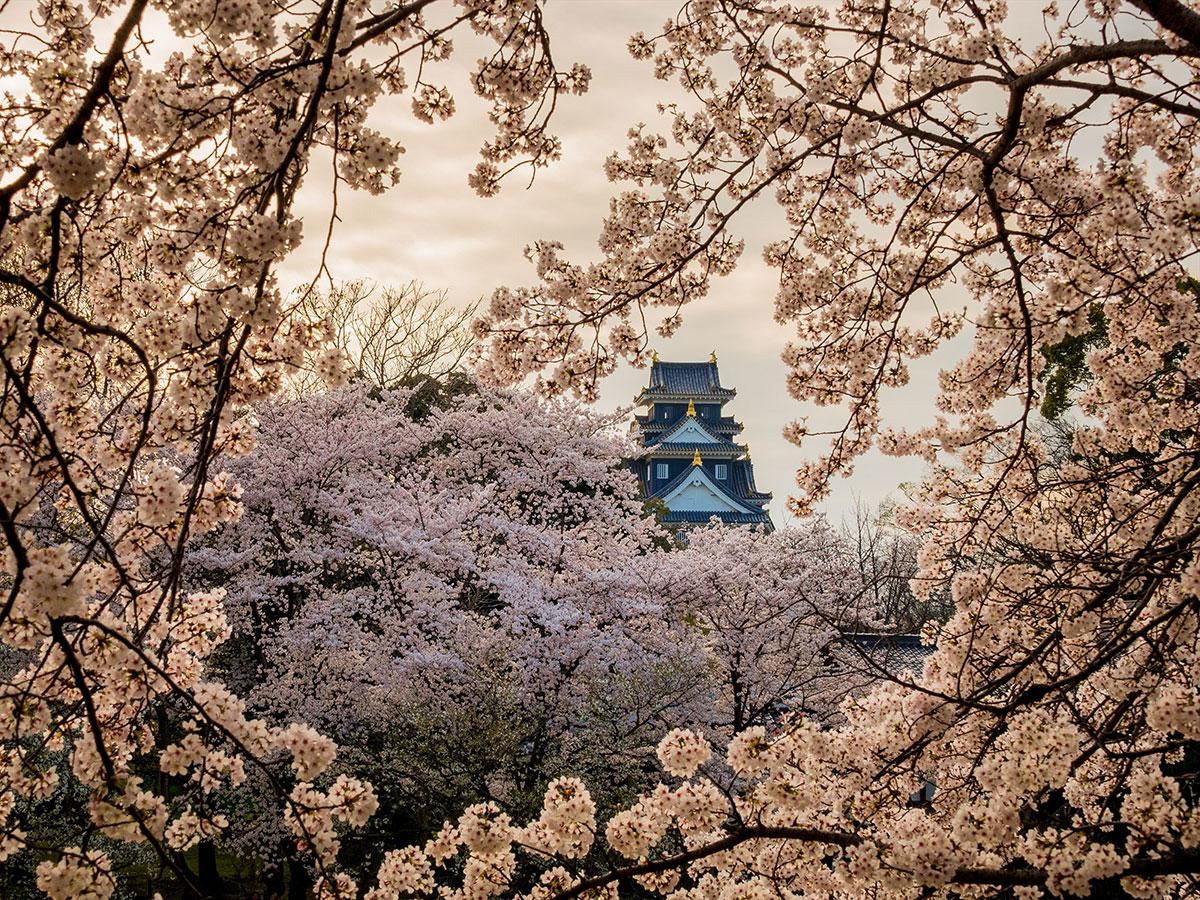 Camino de Cerezos a Orillas del Río Asahi_1