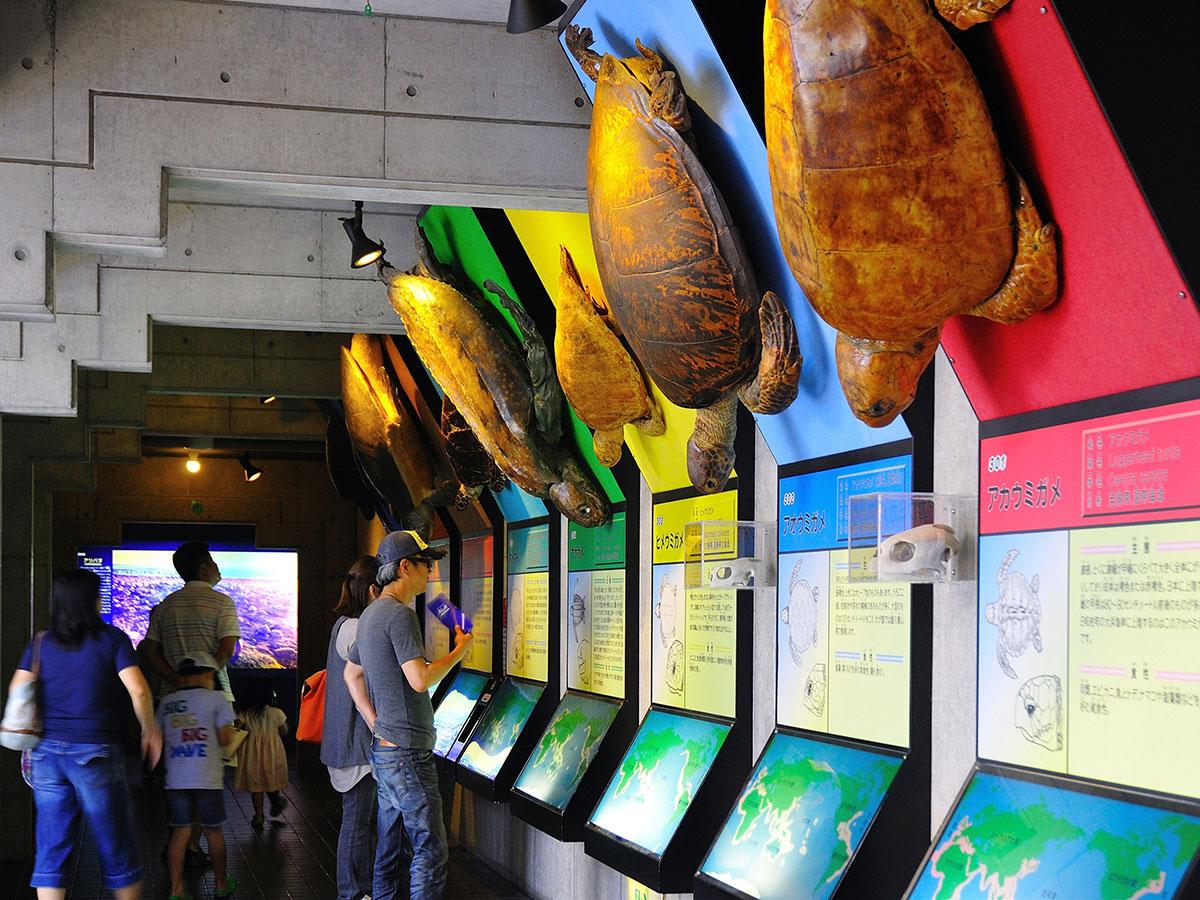 Musée Caretta des tortues de mer de Hiwasa_2