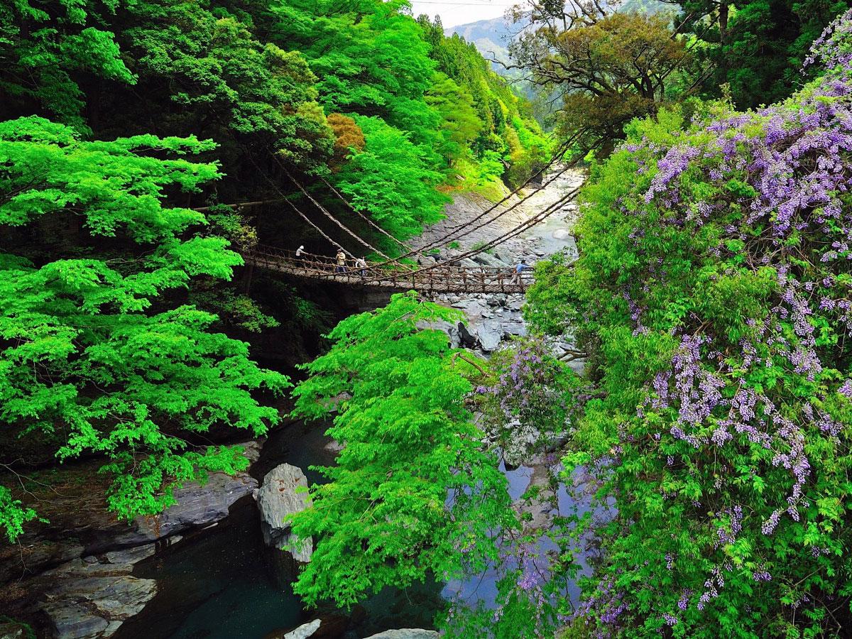 Iya no Kazurabashi_2