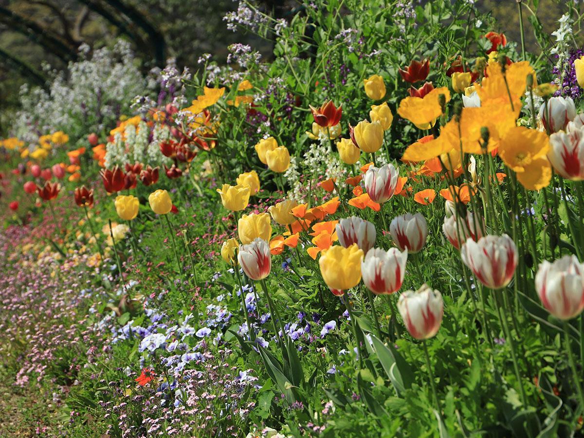 Monet's Garden Marmottan in Kitagawa Village_2