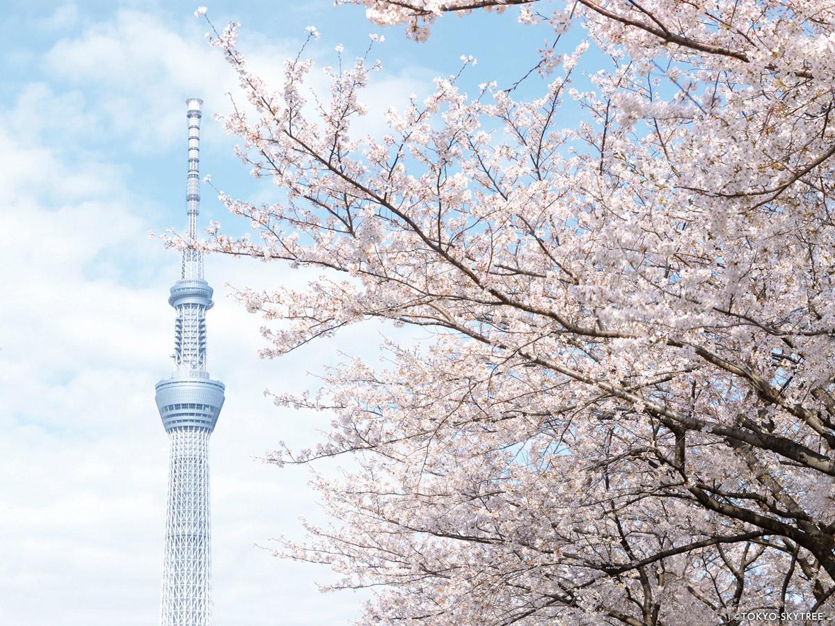 TOKYO SKYTREE®_4
