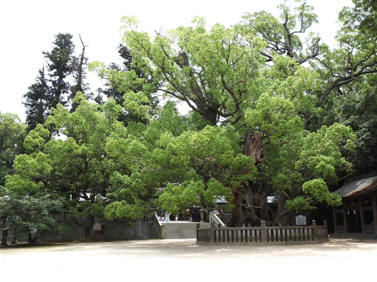 Oyamazumi Shrine_2