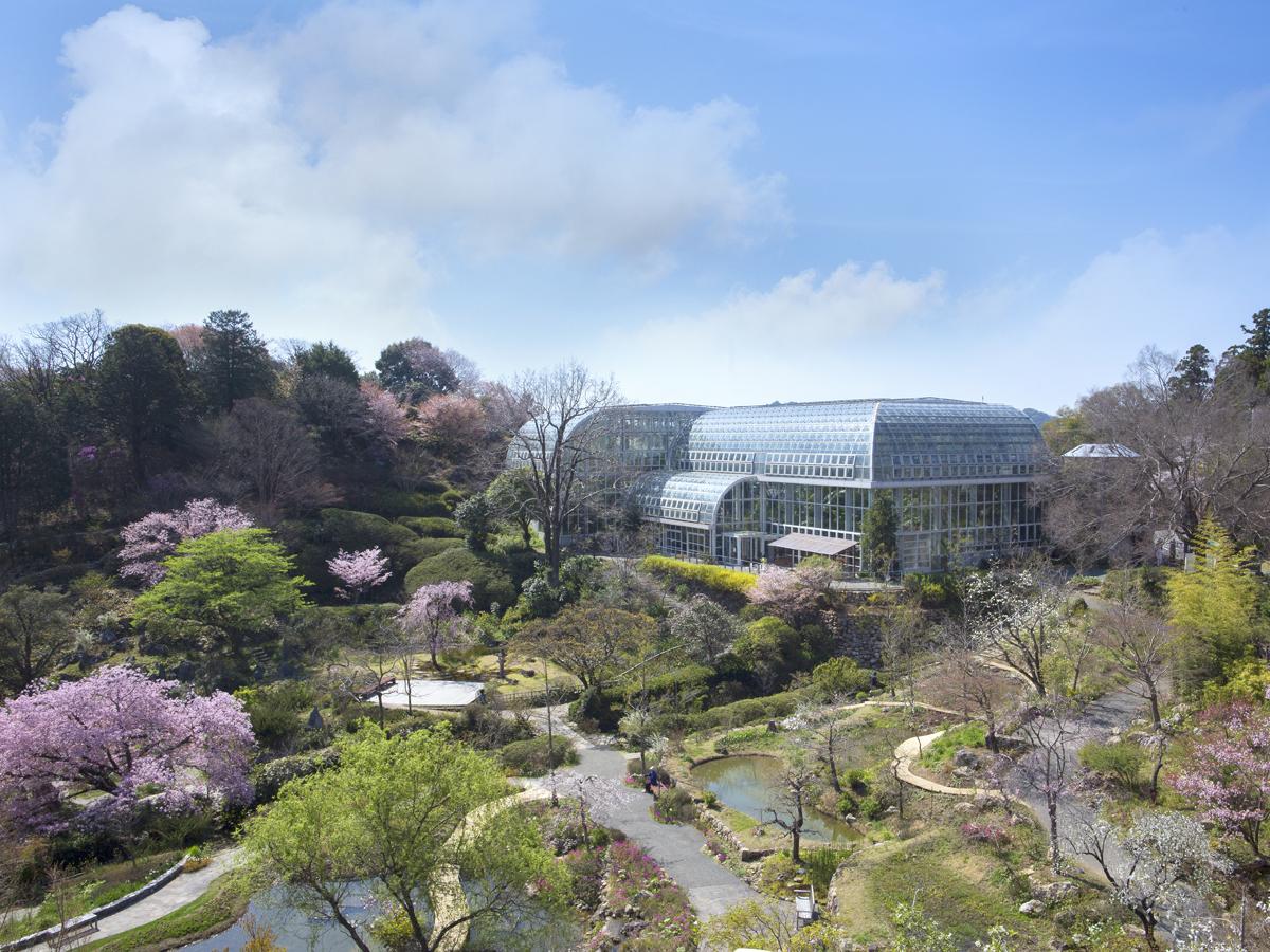 Kochi Prefectural Makino Botanical Garden_1