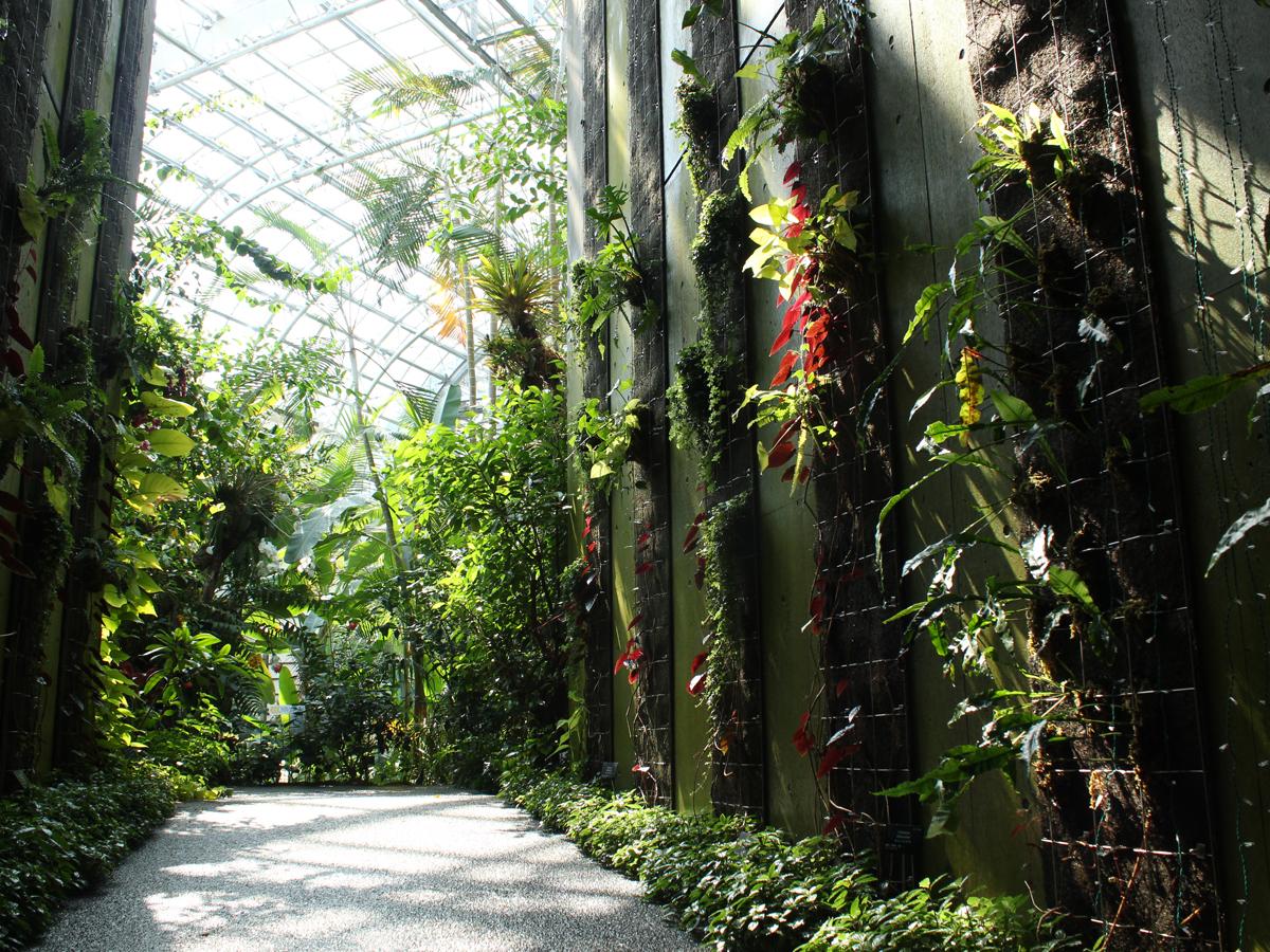 Kochi Prefectural Makino Botanical Garden_4