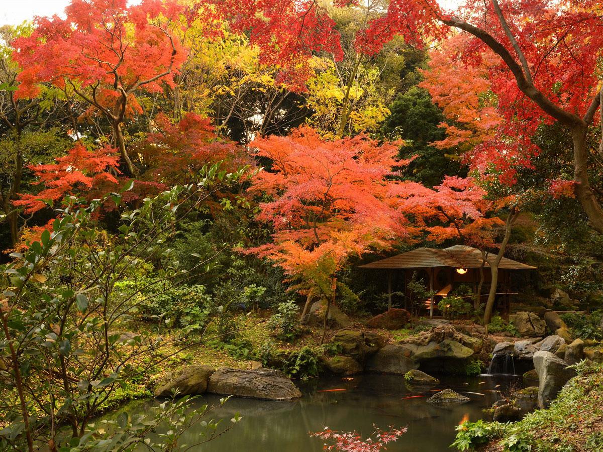 Rikugien Gardens_4
