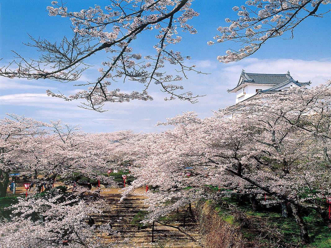 Tsuyama Castle (Kakuzan Park)_3