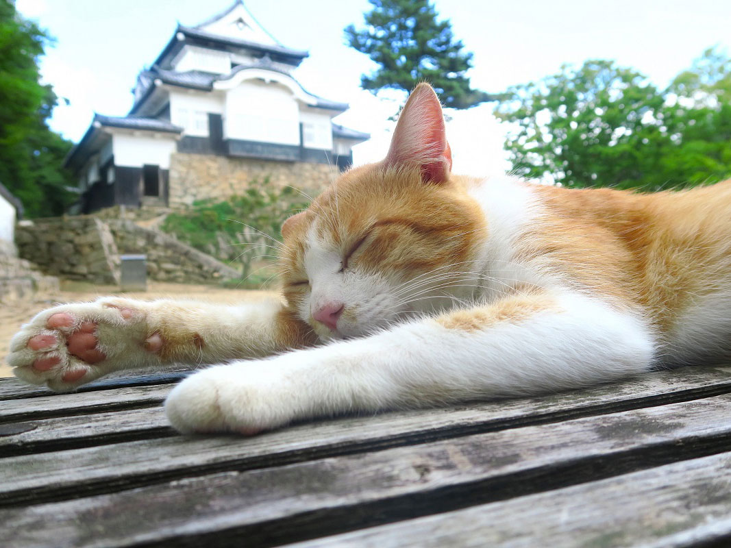 Bitchu Matsuyama Castle_3