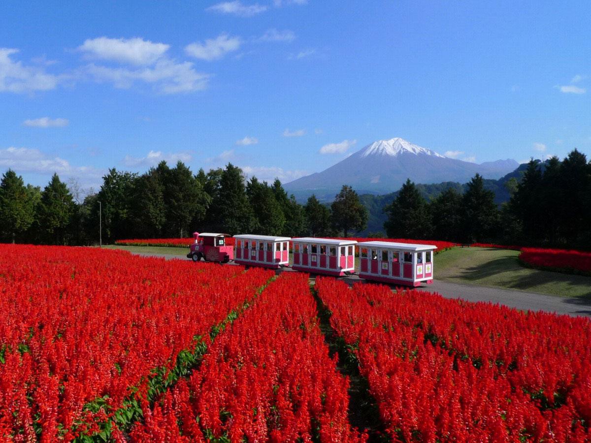 Tottori hanakairo-Flower Park_1