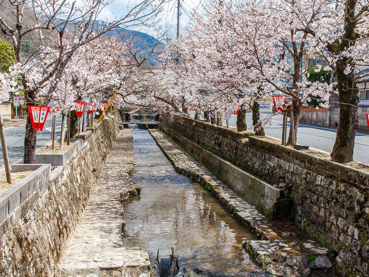 Koyagawa Bikan Historical Quarter_2