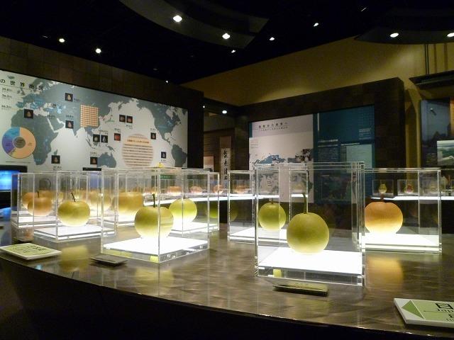 Tottori Nijisseiki Pear Museum Nashikkokan_3
