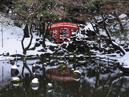 Koishikawa Korakuen Gardens_4