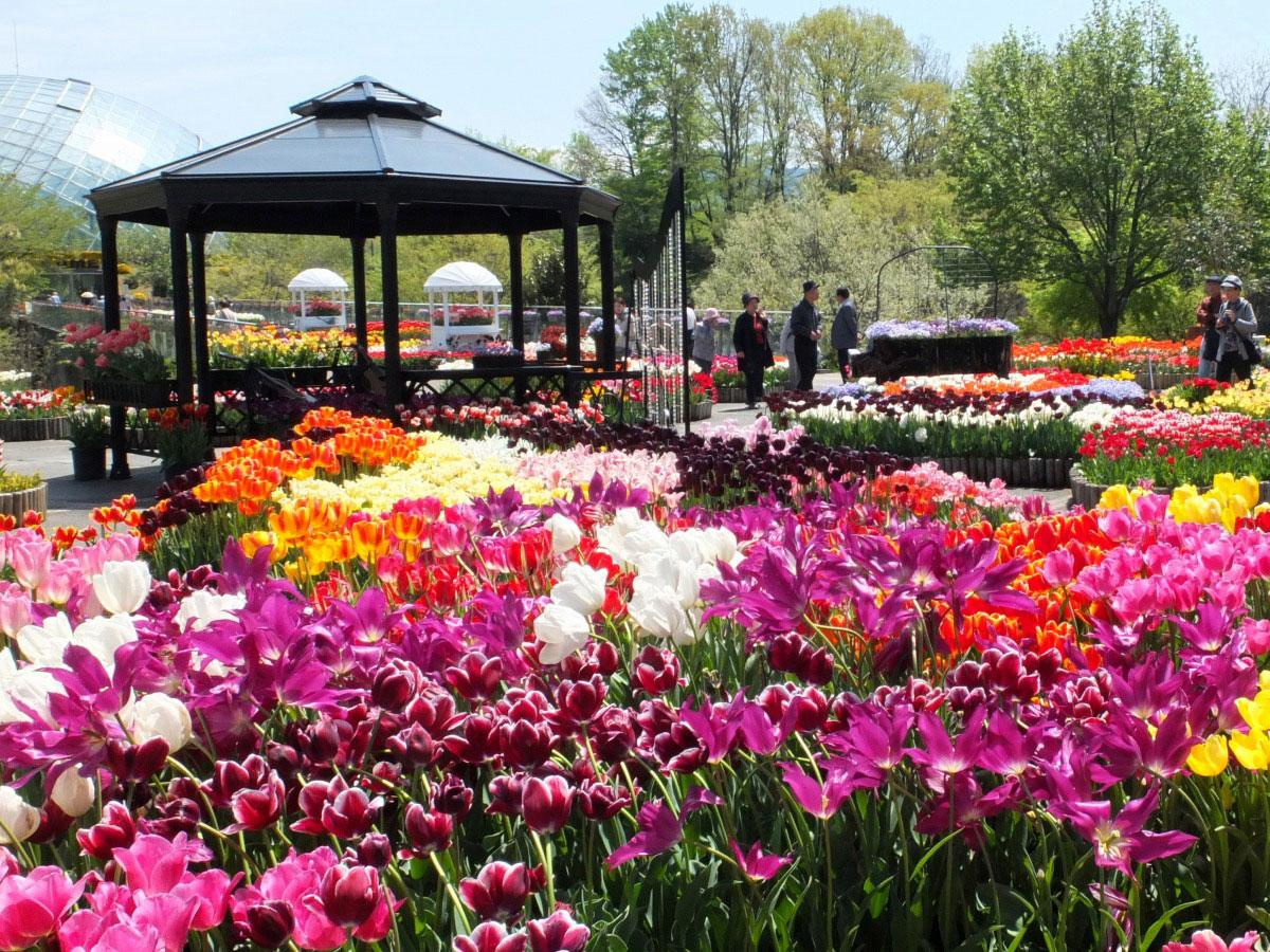 Tottori hanakairo-Flower Park_3