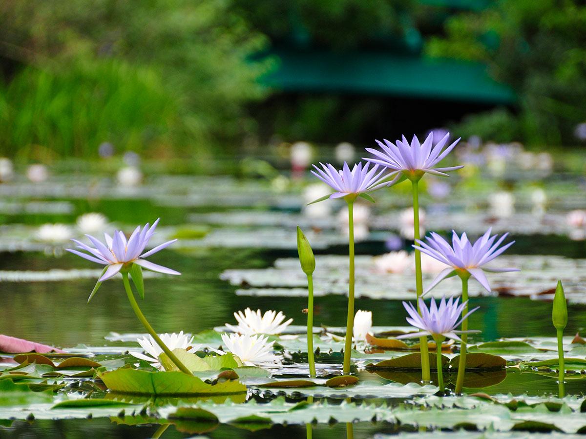 Monet's Garden Marmottan in Kitagawa Village_1