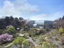 สวนพฤกษศาสตร์มาคิโนะ จังหวัดโคจิ_1