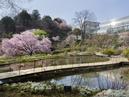 Kochi Prefectural Makino Botanical Garden_2