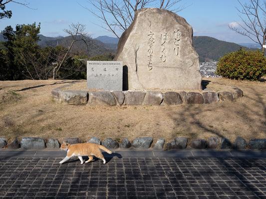 Parque Senkoji_4