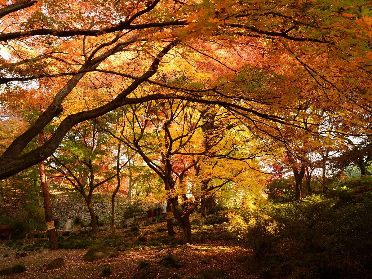 Rikugien Gardens_3