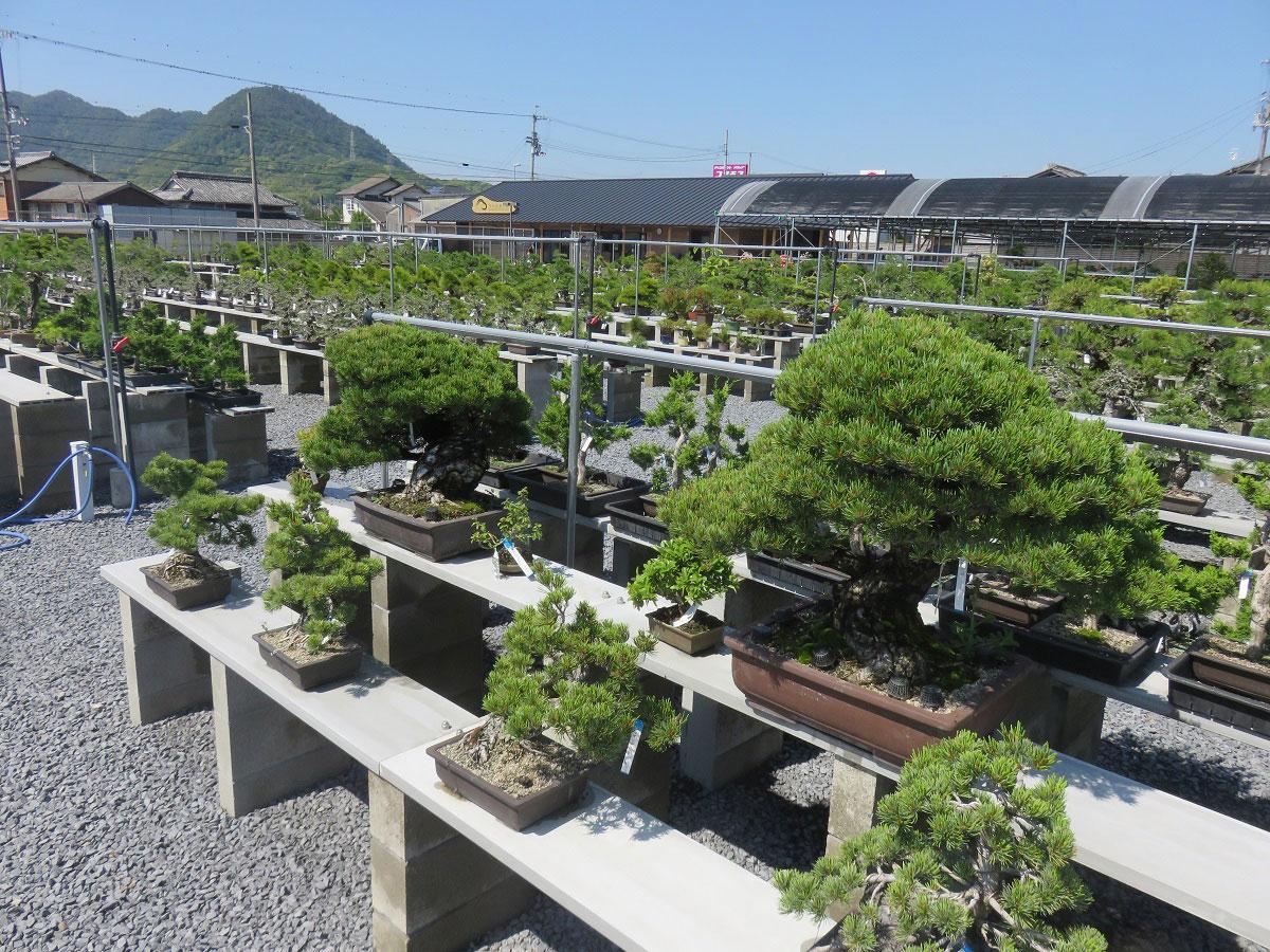 Takamatsu-bonsai-no-sato_1